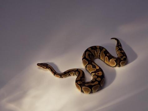 Все фотографии в галерее змеи