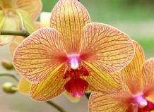ebe0de6ab Мы предлагаем самые здоровые экземпляры орхидеи. В садовом центре «Ваш сад»  Вы можете купить растения мелким или крупным оптом.