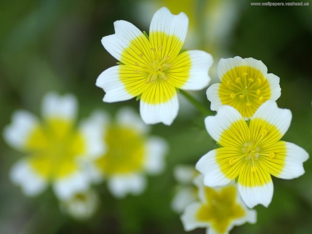 Веселые цветы картинки 7