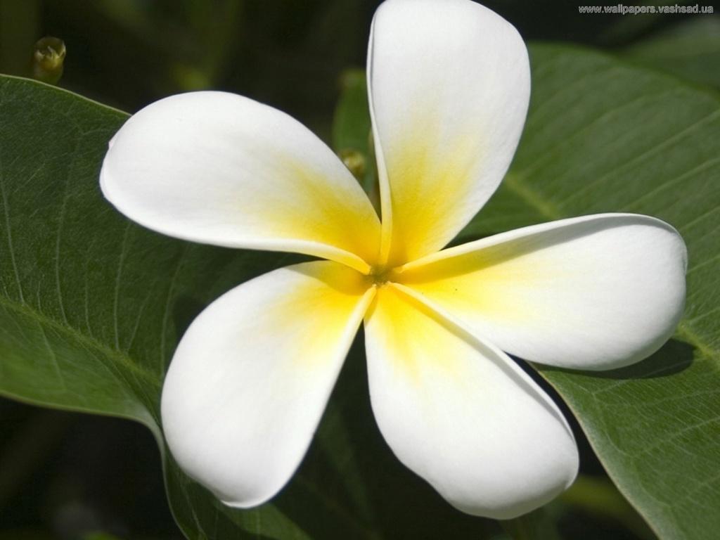 Красивый цветок картинка 6