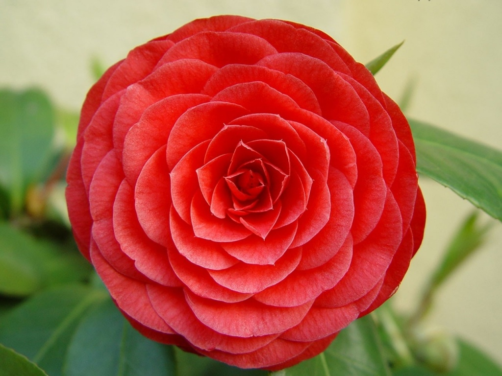 Цветок картинка 3