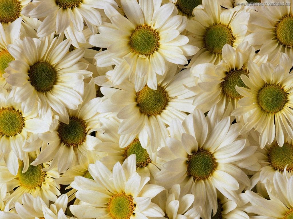 Цветы для наташи картинки 3