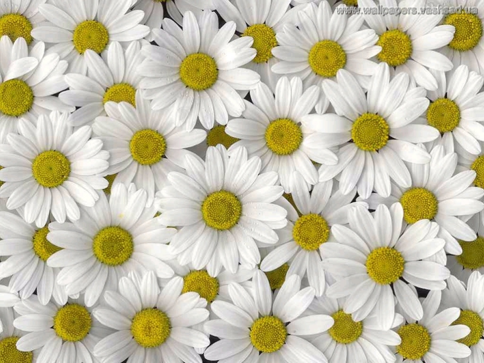 цветочки в платочках, Цветы, Приколы, Прикол, Смех, Юмор.