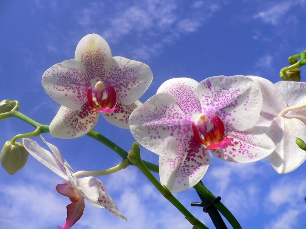 Картинки тропических цветов 3