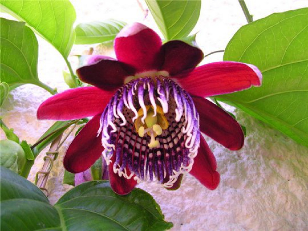 Картинки тропических цветов 6