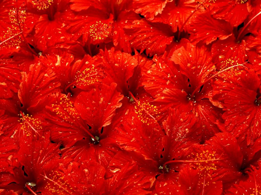 Красный цвет картинки 4