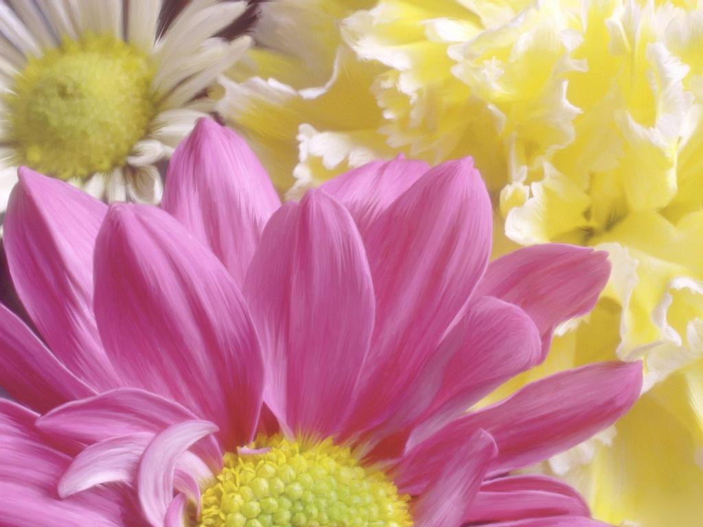 Большие картинки цветов 3