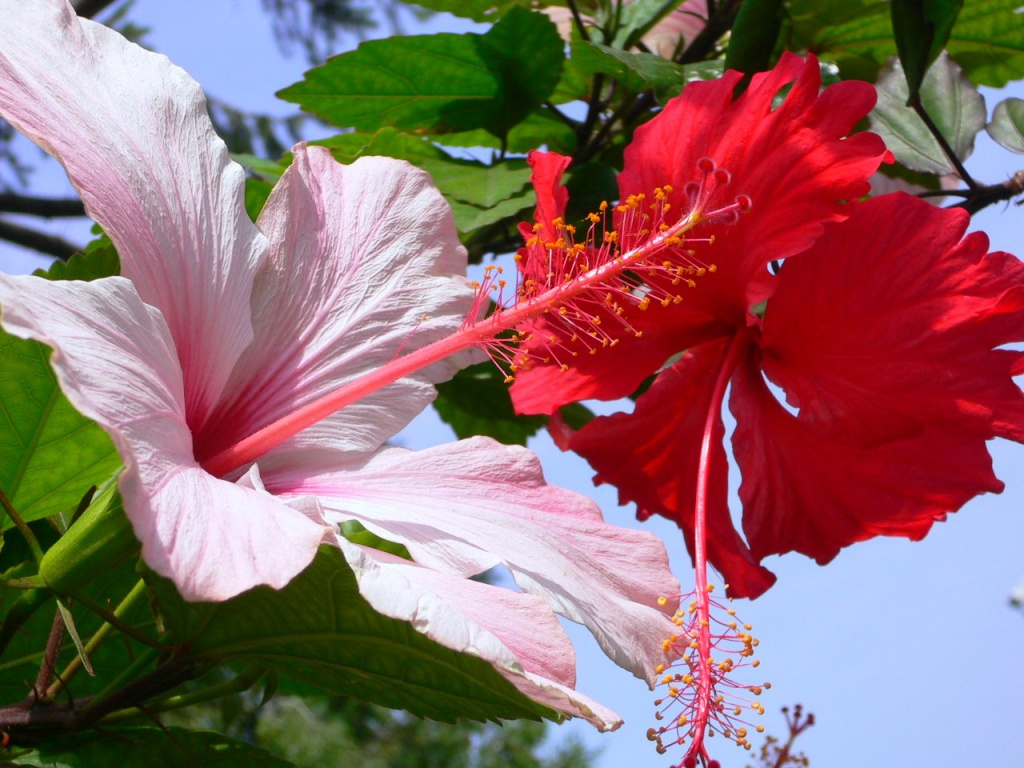 Картинки тропических цветов 2