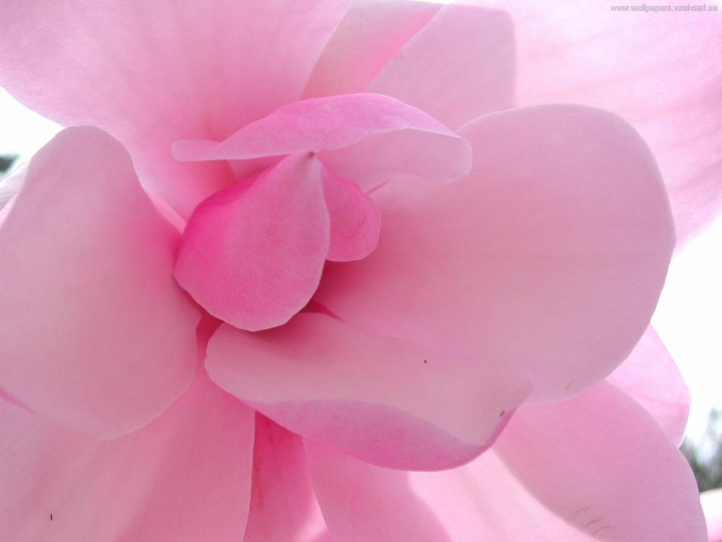 Картинки нежно розовый цвет 4