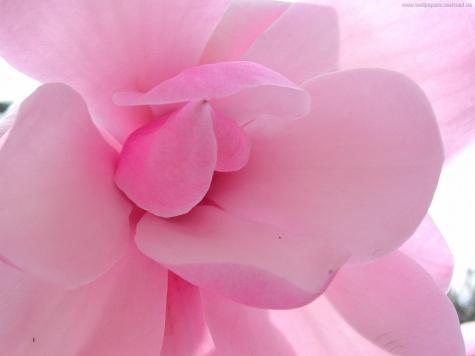 Тест: Какой ты цвет.  Твоему характеру подходит розовый цвер.