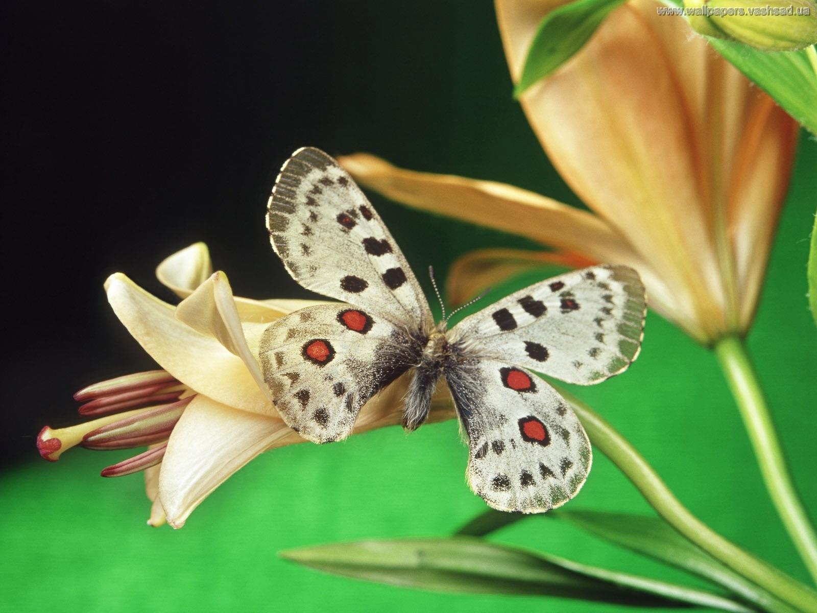 Фото цветы и бабочка
