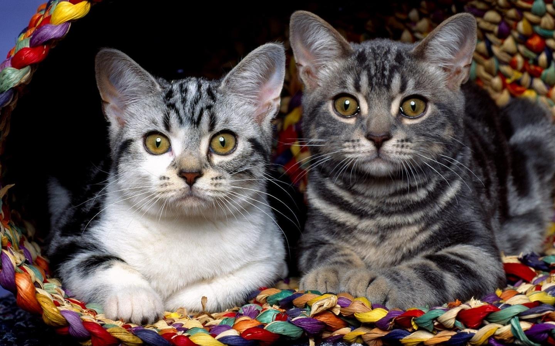Кошачьи Знакомства