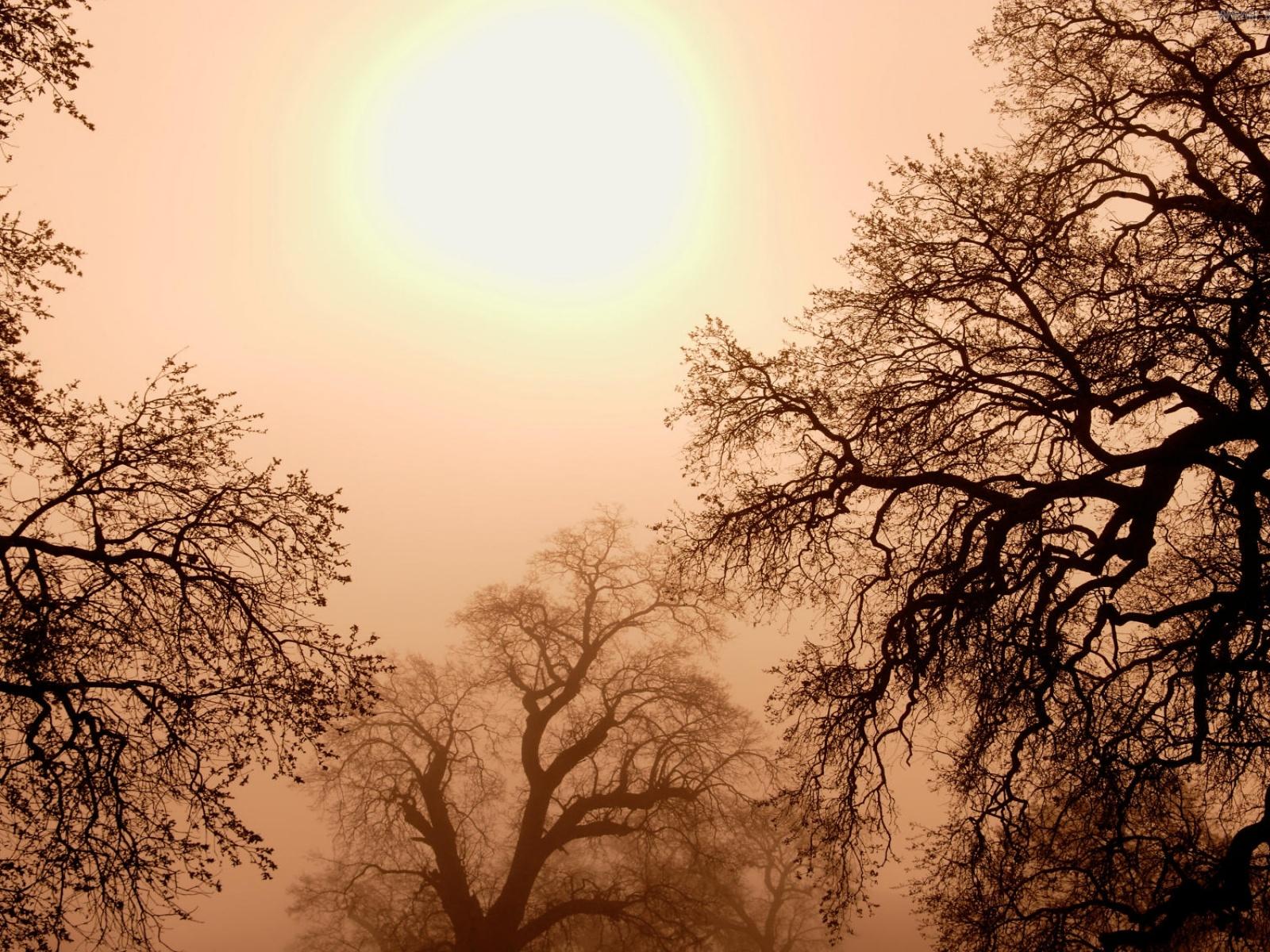 Скачать деревья, небо, солнце, туман, фото, обои, картинка #150362