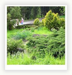 Хвойный сад Main_3