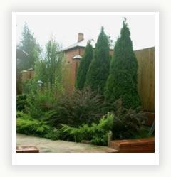 Хвойный сад Main_4