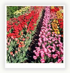 Садовые дорожки – необходимый атрибут вашего загородного участка