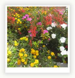 Цветник, как особый элемент декора вашего садового участка