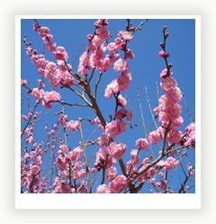 5 чувств в вашем саду. Часть IV, вкус как элемент ландшафтного дизайна
