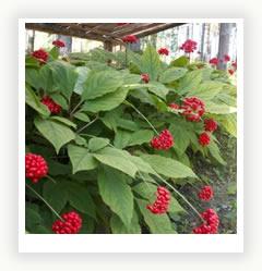 Чудесные растения