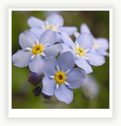 Сад в синем цвете