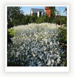 Сад в белом