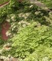 Какие вьющиеся растения лучше использовать для защиты от солнца?