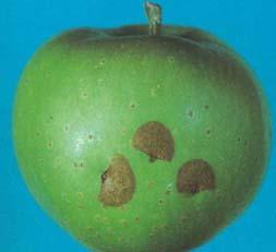 Хавроньи вместо пестицидов