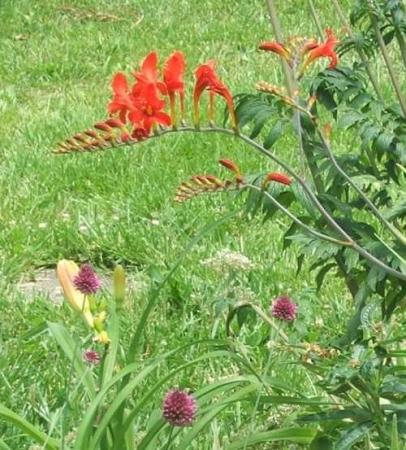 Заморские растения  против  местных?