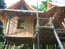 Домик из бамбука