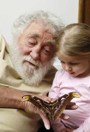В Британии возведут самый большой в мире павильон для бабочек