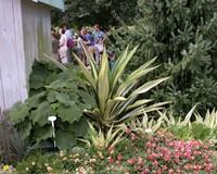 Формиум –растение, которое производит впечатление