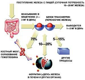 Дефицит железа в организмах восполнят растения