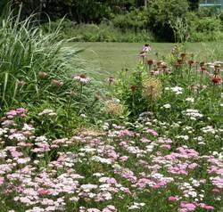 Проектируем сад здравого смысла и разумного водопотребления