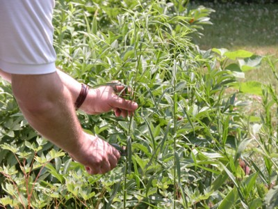 Уход за садом- прищипывание, удаление увядших цветков, обрезка