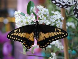 """Фотоотчёт по выставке экзотических бабочек в магазине """"Ваш Сад"""""""