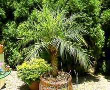Лучшая десятка очищающих воздух растений