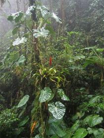 В Коста-Рике нашли одиннадцать новых видов растений и животных