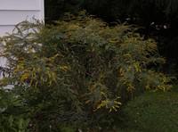 Пчелиные растения