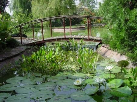 Декоративные пруды (фото)