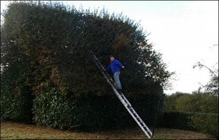 Художественная стрижка любителей-садоводов