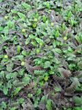 Растения, по которым ходят