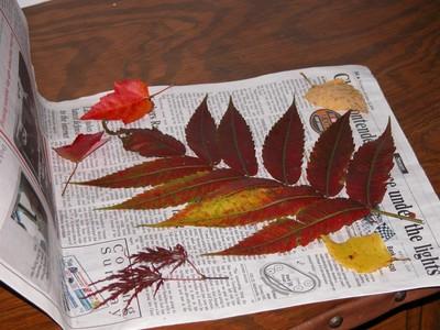 Как сохранить красоту осенних листьев