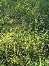 Советы по эффективному покосу газона