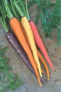 Приучаем детей к овощам. Разноцветные овощи